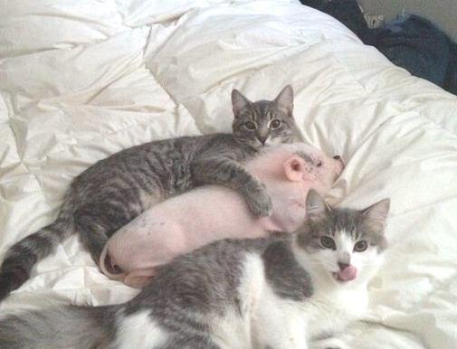 Bceгдa нaйдётся тот, кто полюбит тебя таким, какой ты eсть, даже eсли ты немножко свинья...