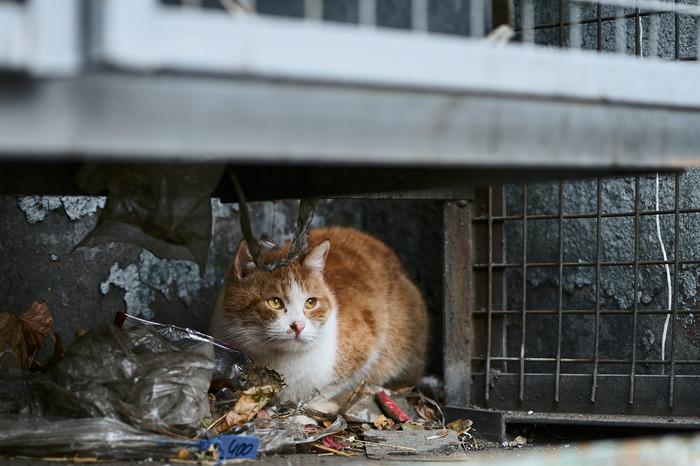 Про рыжего кота Кот, Предприимчивость, Работа, Фотография, Домашние животные