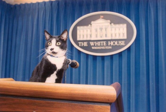 Кот Билла Клинтона занял подиум пресс-секретаря в Белом доме, 1993 год