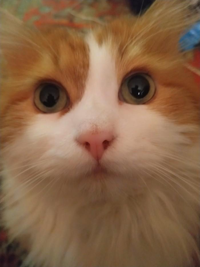 Поделюсь своим котом Фото на тапок, Кот, Рыжая морда, Домашние животные