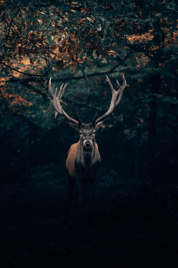 Король леса