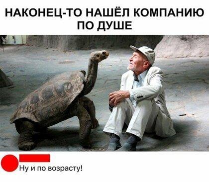 Здравствуйте! Черепаха, Друг, Встреча, Юмор