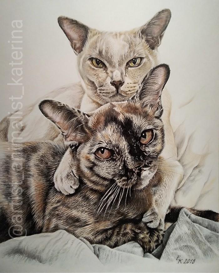 Портреты котиков. Часть 2. Портрет, Кот, Рисунок, Цветные карандаши, Длиннопост