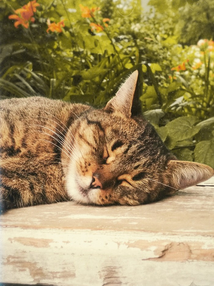 Котик:3