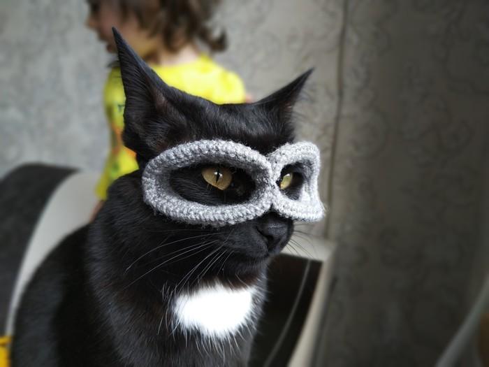 Супергерои среди нас Кот, Супергерои