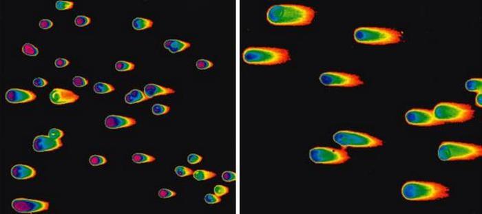 ДНК-кометы Наука, Генетика, ДНК, Диагностика, Копипаста, Elementy ru, Видео, Длиннопост