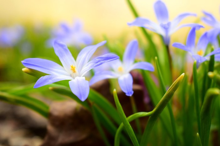 Мир становится цветным – это весна! Цветы, Весна, Ботанический сад, Тепло, Фотография