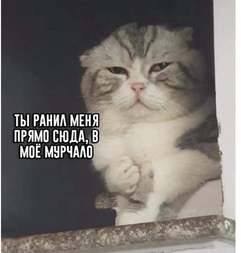 Когда не стал кормить кота в 5 раз за час Кот, Копипаста