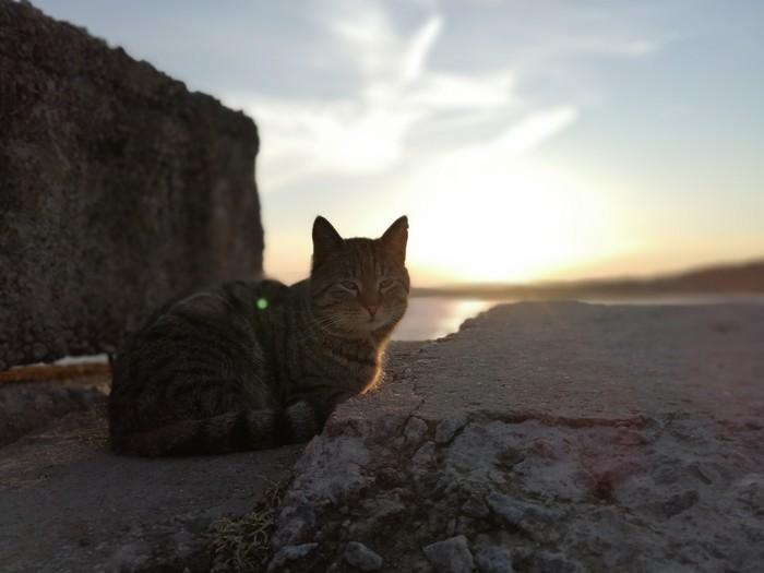 Солнце и кот Кот, Солнце, Природа