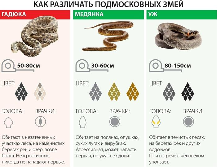 Как различить подмосковных змей