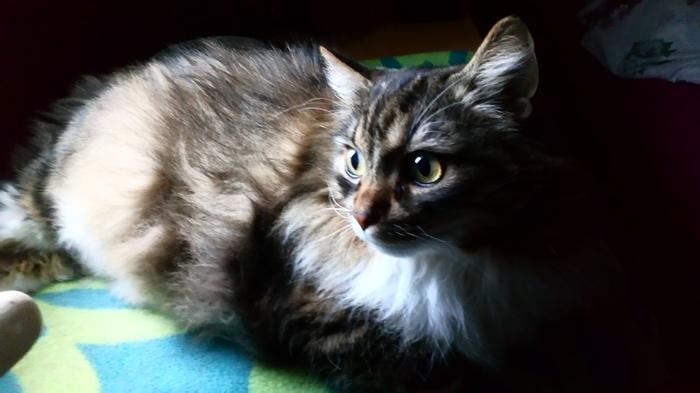 Задумался. Кот, Фото на тапок, Домашние животные