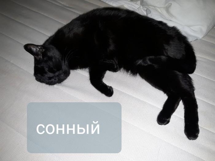 Какой ты сегодня? Кот, Эмоции, Домашние животные, Забавное, Длиннопост