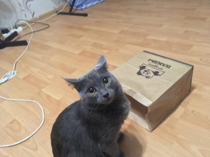 Любимый с детства пакет Кот, Котомафия, Коробка и кот, Было-Стало
