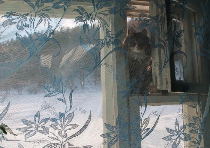 Форточница Кот, Фотография, Начинающий фотограф, Окно, Домашние животные