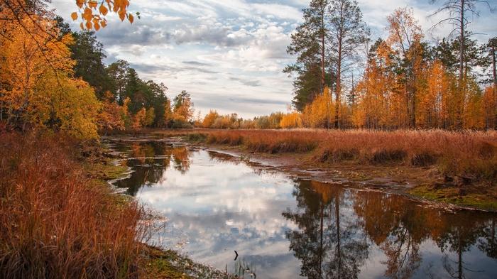 Сибирь, осень Сибирь, Лянтор, ХМАО, Осень, Олень, Природа, Длиннопост