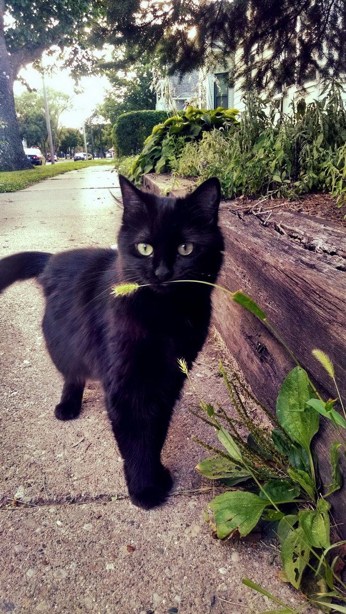 Чуточку котиных фотов на рабочий стол, авось кому^) /есть баяны/ Кот, Фотография, Подборка, Длиннопост, Черный кот