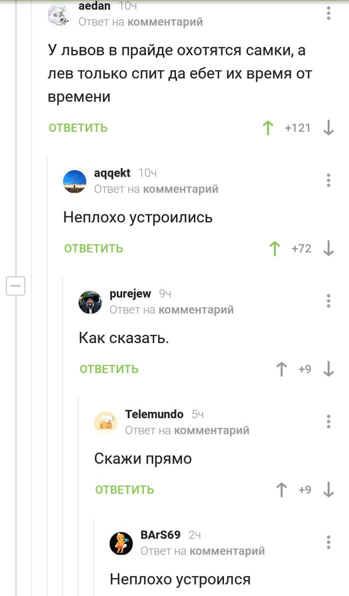 Неплохо устроился Комментарии, Комментарии на Пикабу, Лев, Устроился