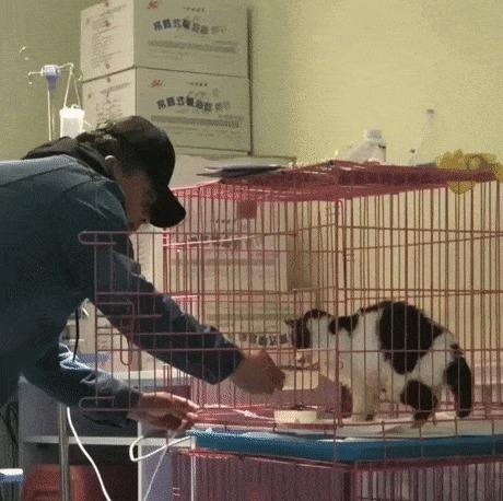 Раненой кошке не хватает тепла человека