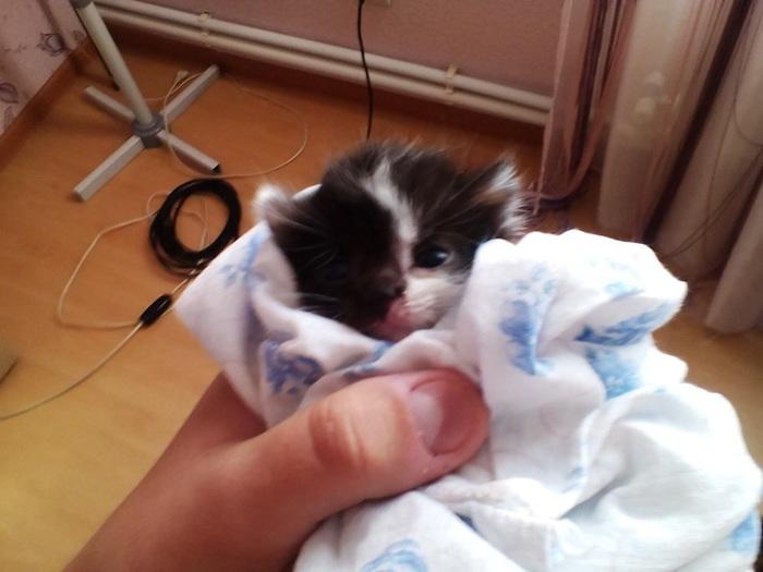 Обычная история со счастливым хвостом) Кот, Реальная история из жизни, Спасение животных, Доброта, Длиннопост