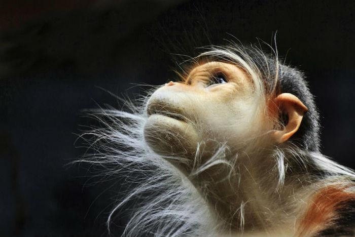 """Думают ли животные? Рефлекторное """"мышление"""" Психология, Мышление, Сознание, Видео, Длиннопост"""
