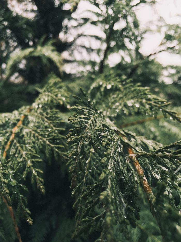 После дождя. Фотография, Природа, Природа России, Крым, Длиннопост