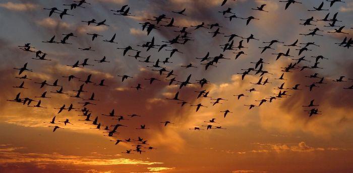 Огни больших городов губят перелетных птиц Птицы, Загрязнение окружающей среды