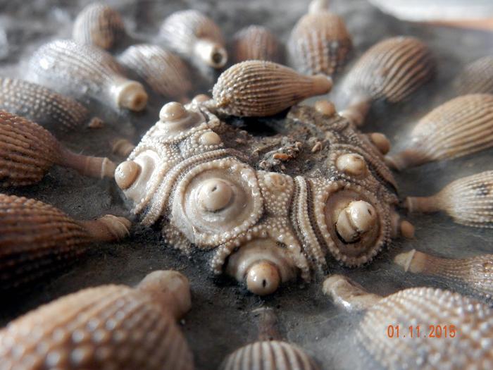 Немного качественных ископаемых. Палеонтология, Интересное, Познавательно, Окаменелости, Ископаемые, Доисторические животные, Прошлое, Экспонат, Длиннопост