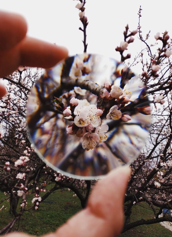 Апрель сквозь линзу Мобильная фотография, Оптика, Цветы, Длиннопост