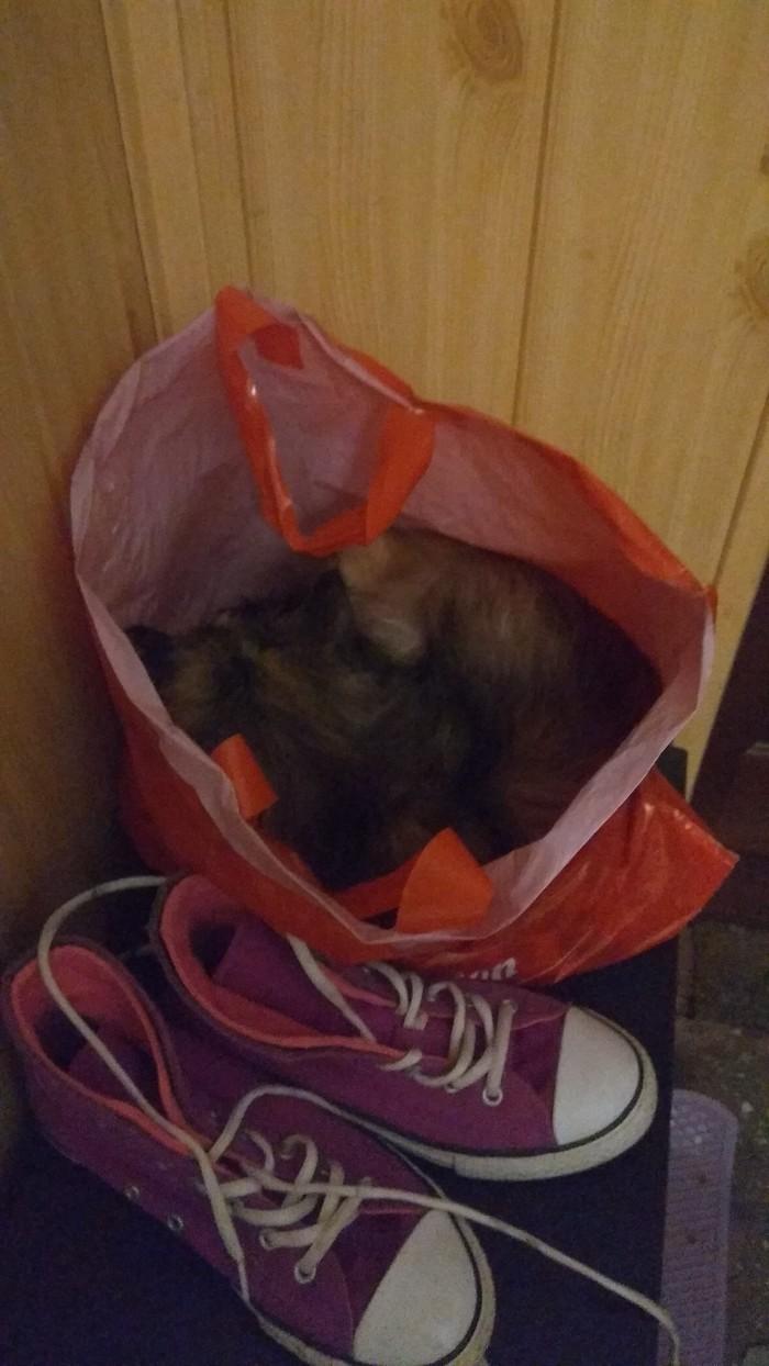 Сегодня кошка ночевала в коридоре Кот, Котомафия, Пакет