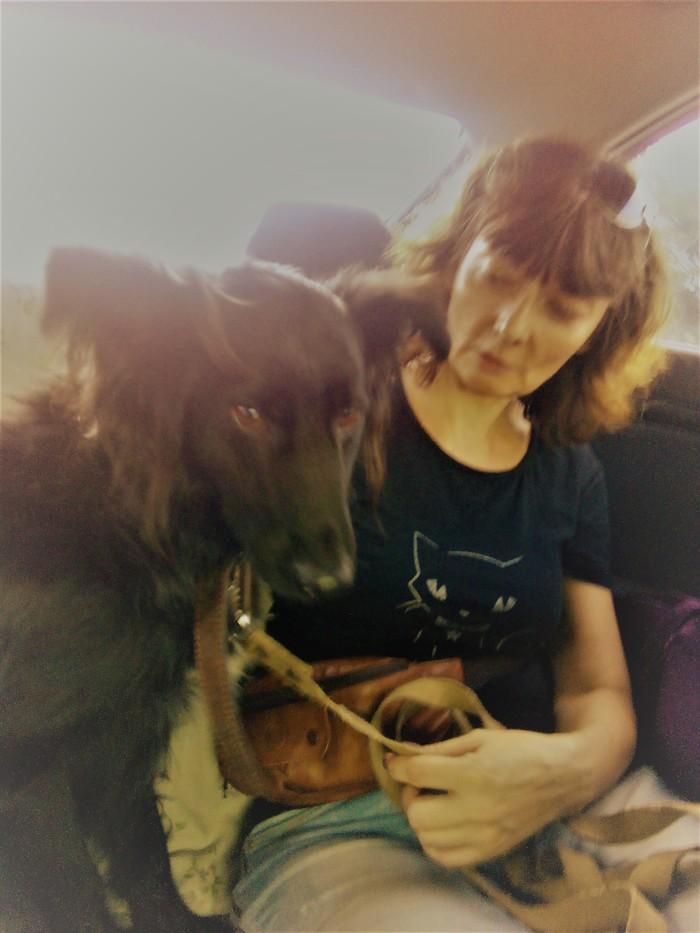 Наш Динар по дороге домой из приюта и 2 года спустя Приют, Собака, Видео, Длиннопост