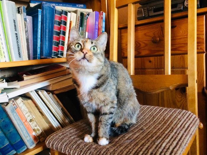 Когда в комментах на Пикабу предлагали тебя усыпить, но ты не понимаешь человеческой речи. И у тебя лапки. Кот, Волонтеры, Санкт-Петербург, Ветеринария, Помощь животным, Удивительное, Длиннопост