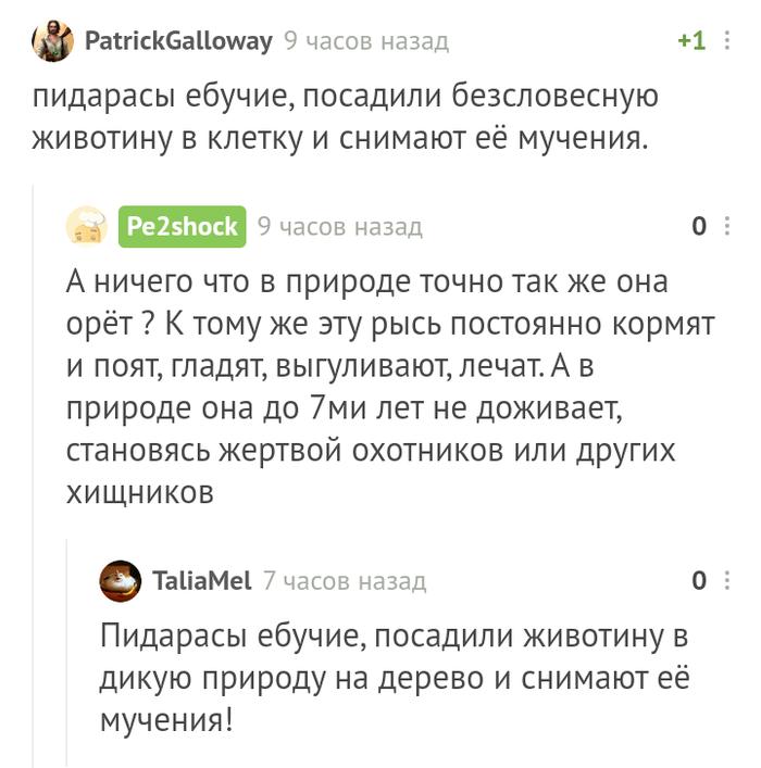 Съёмки Комментарии на Пикабу, Рысь, Мат, Комментарии, Скриншот