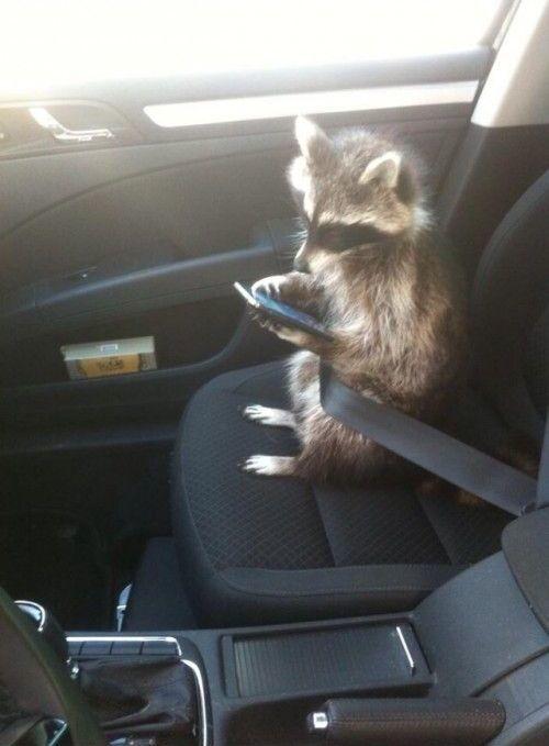 Лучший пассажир