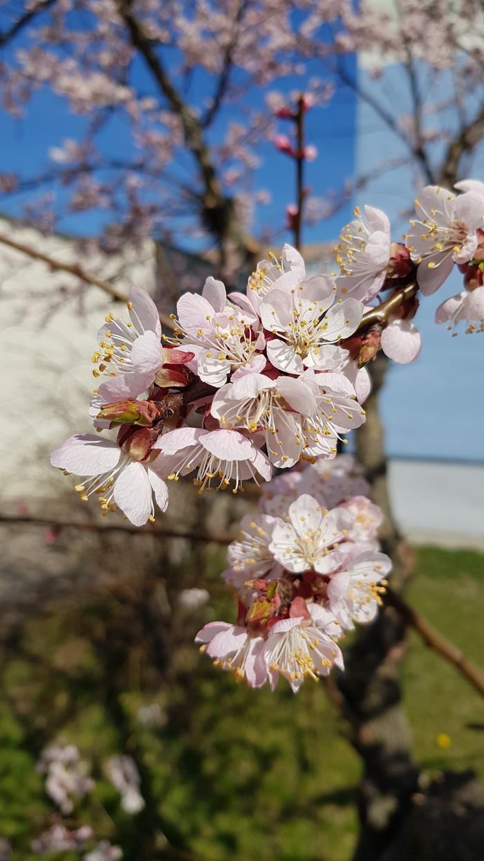 Весны вам в ленту. Весна, Тепло, Макросъемка, Длиннопост