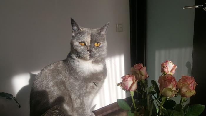 Еще котиков Кот, Фотография, Настроение, Длиннопост