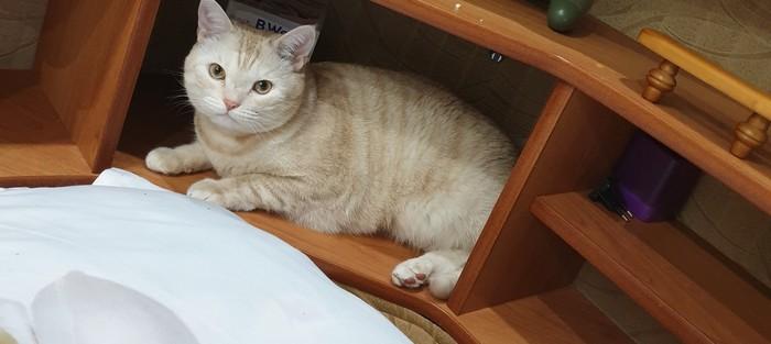 Потерялся кот г.Уфа Уфа, Потерялся кот, Длиннопост, Кот, Помогите найти, Без рейтинга, Помощь
