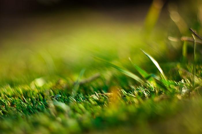 Немного весенних фотографий. Деревня, Природа, Фотография, Весна, Макро, Алтай, Длиннопост