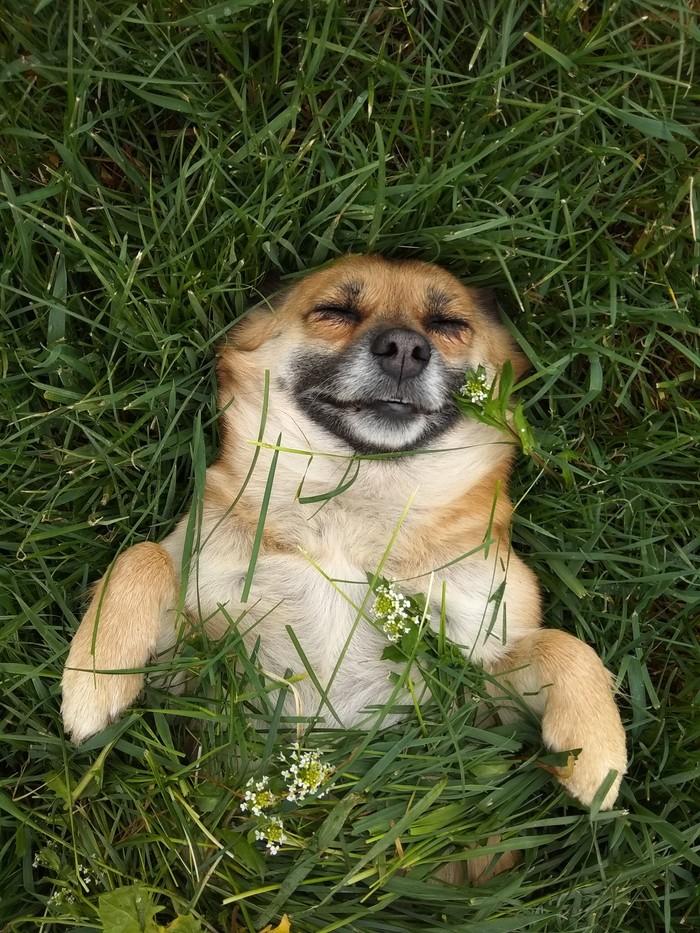 Just smile Собака, Природа, Весна, Фотография, Длиннопост, Трава, Дети, Балдеж