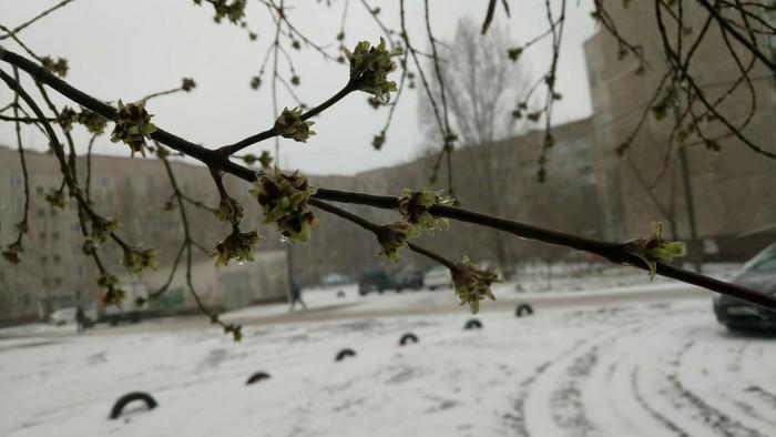 Весна Снег, Весна, Казахстан, Павлодар