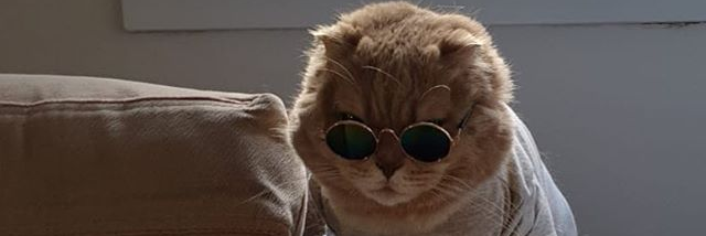 Очки и стереотипы Кот, Стереотипы, Ассоциации, Скриншот, Комментарии на Пикабу