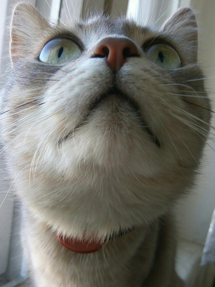 Кошка Мышка
