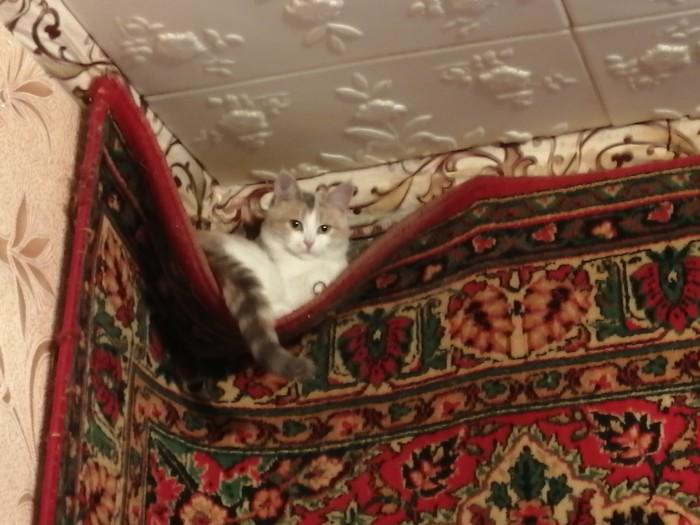 Я, пожалуй, здесь посижу. Трехцветная кошка, Кот, Ковер, Удобство, Фотография