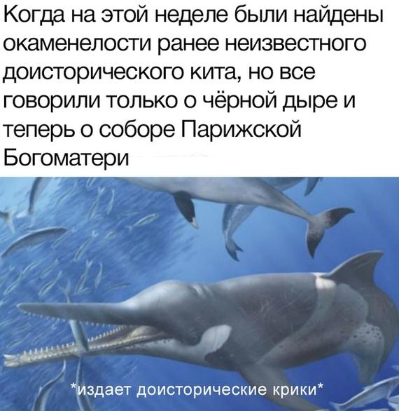 Не обижай кита