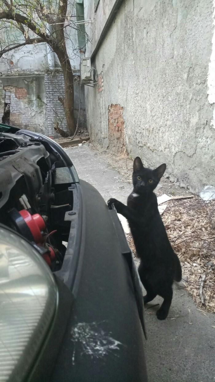Главный механик Кот, Машина, Ремонт