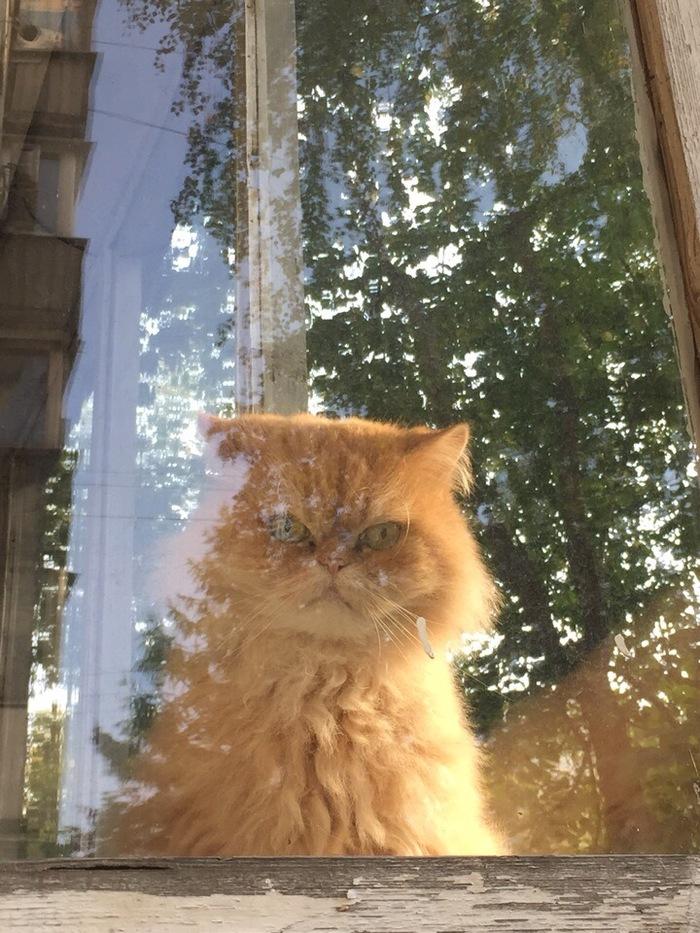 Кот моих соседей Кот, Ненависть, Длиннопост