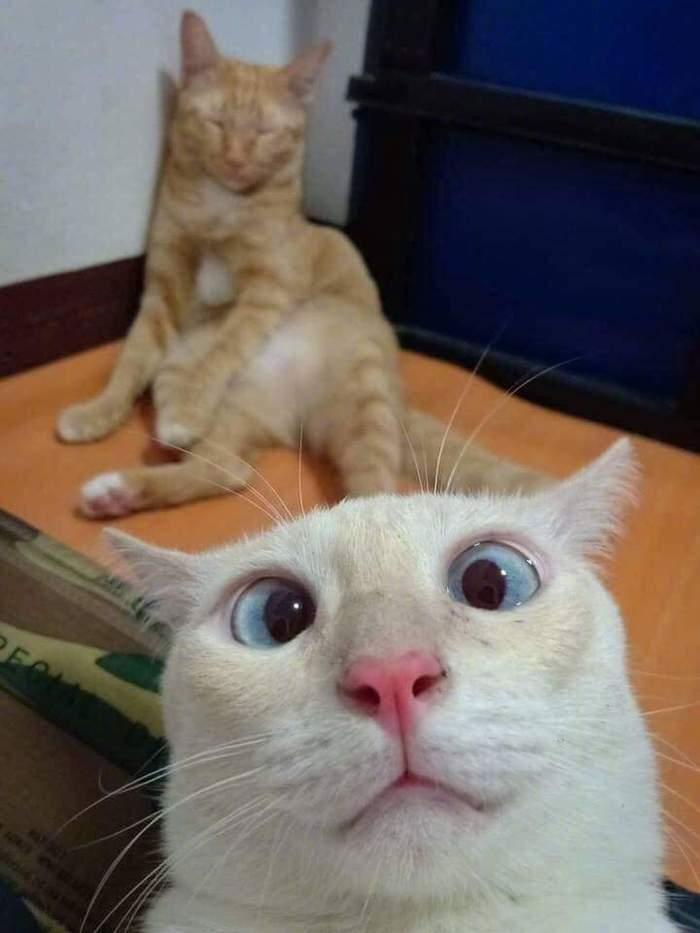 Взгляд:) Кот, Взгляд, Селфи, Фотография, Длиннопост