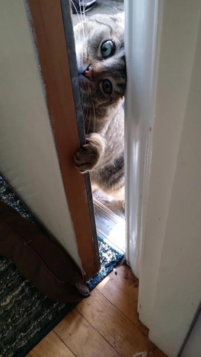 Кошка моего соседа считает, что мой дом - ее тоже.