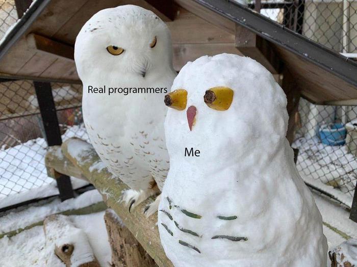 Настоящий программист и Я