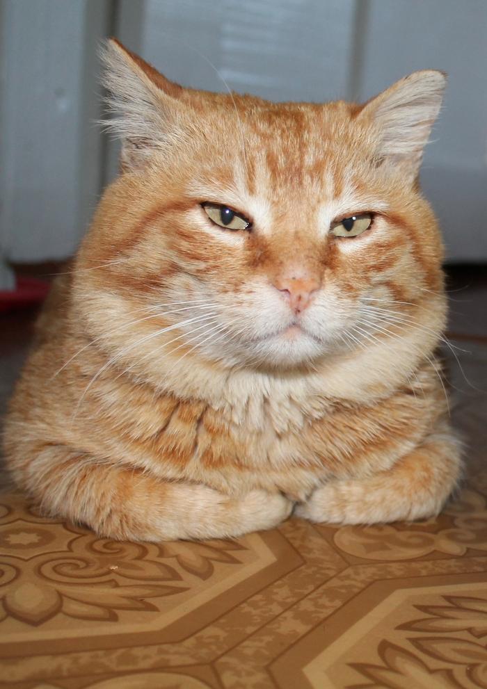 Явно что-то замышляет Кот, Котомафия, Рыжий, Фотография, Canon, Домашние животные, Усатый-Полосатый