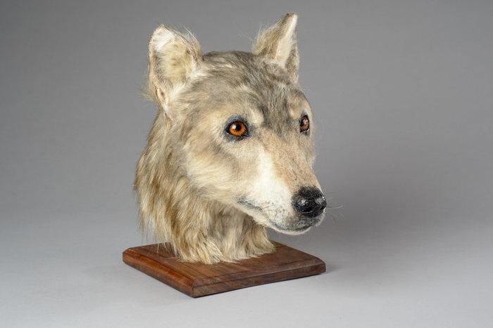 Древний хороший мальчик из неолита Собака, Наука, Реконструкция, Неолит, Шотландия, Познавательно
